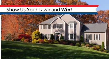 show-us-your-lawn-and-win