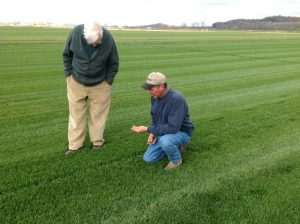 A Sod Grower inspecting his Black Beauty Sod.
