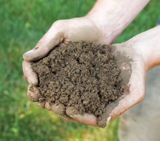 Lawn Soil Microbes and Lawn Health