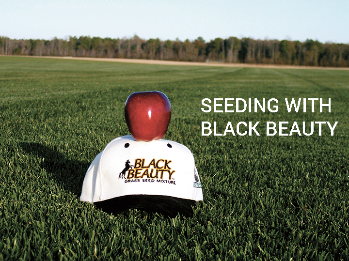 Seeding With Black Beauty