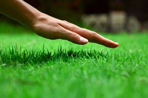 All is Not Lost! Fall Lawn Fixes After Summer Drought