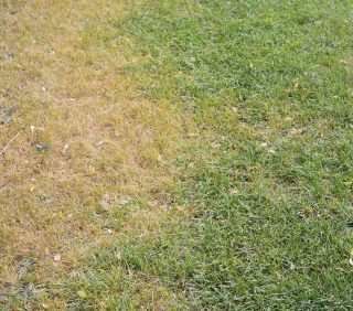 Heat of Summer has Arrived  | Help for Your Lawn