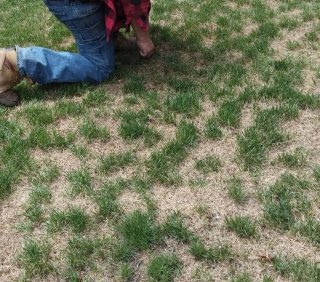 Damage to Lawns this Summer for Many Reasons