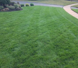 Show Your Lawn a Little Love with Quality Products