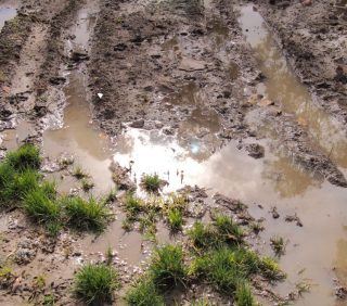 Runoff – What Can I Do About It?