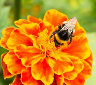 Bees buzzing….The Benefits of Wildflowers
