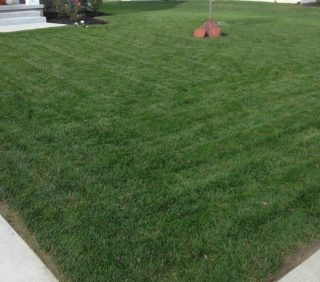 Lawn Fertilizer First Thing in the Spring