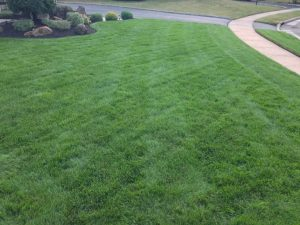 When to Overseed Lawn in Michigan
