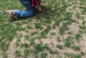 When to Overseed Lawn in Virginia