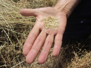 When to Plant Grass Seed in Ohio