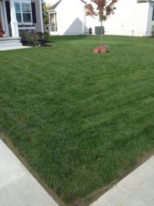 When to Plant Grass Seed in Pennsylvania