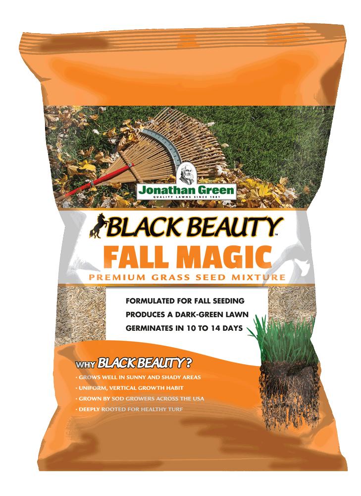 BB-Fall-Magic