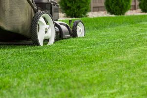 Best Time to Reseed Lawn