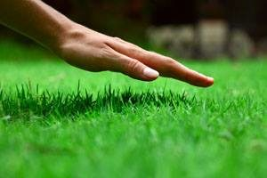 When to Plant Grass Seed in Maine