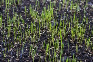 When to Plant Grass Seed in Wisconsin