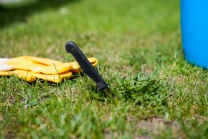 Can You Put Down Grass Seed in the Winter?