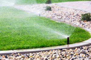 When to Overseed Lawn in Massachusetts