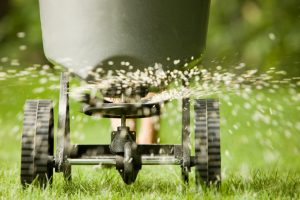 When to Plant Grass Seed in Connecticut