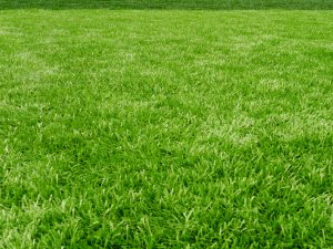 When to Plant Grass Seed in Tennessee