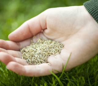 hand_applying_grass_seed