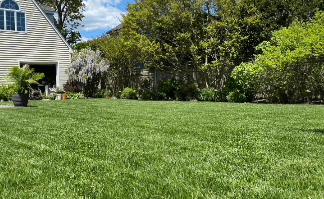 lawn_with_jonathan_green_grass_seed