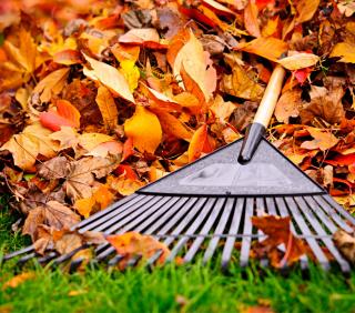 Fall leaves rake grass