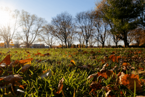 green grass fall leaves bare trees bright sun