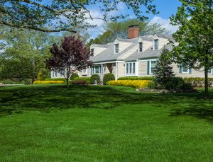 dark green lawn with trees and yellow flowers forsythia in background white suburban house blue sky