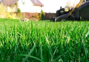 close up of grass with mower in background house and fence out of focus