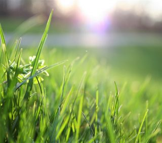 close up of grass sun in background