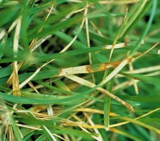 Everything You Need to Know About Lawn Fungus