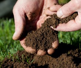Feed Your Lawn And Soil