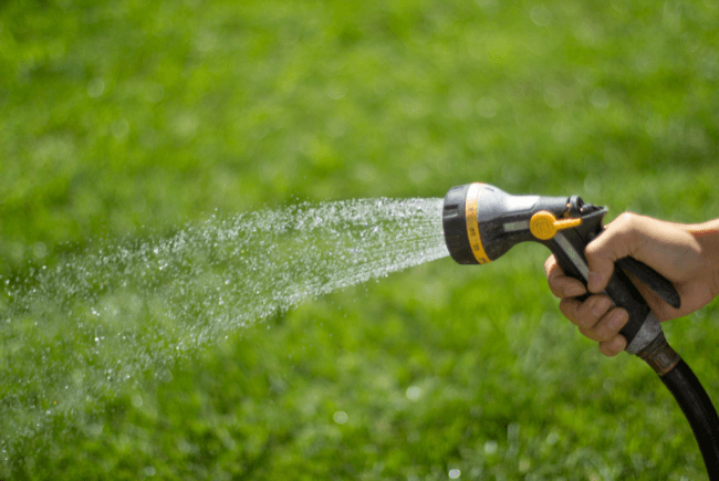 person watering lawn