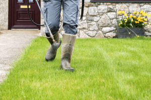 man in boots spraying bright green lawn yellow flowers in background (1)