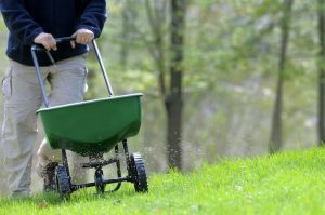 Should I Fertilize My Lawn in the Summer?