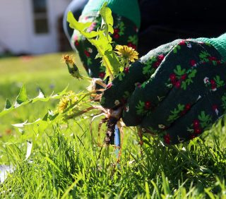 5 Things You Need to Know to Control Weeds in Your Lawn