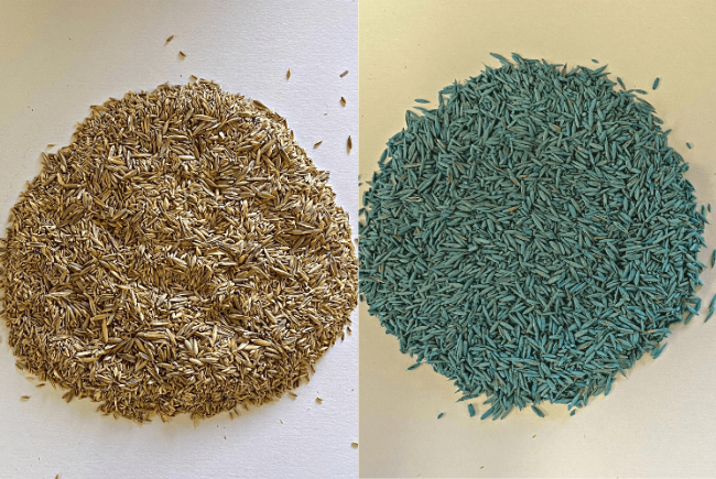 uncoated_and_coated_seed