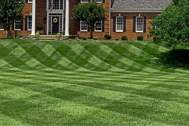 Show_Us_Your_Lawn_Contest_Winner-IN_Beautiful_Lawn